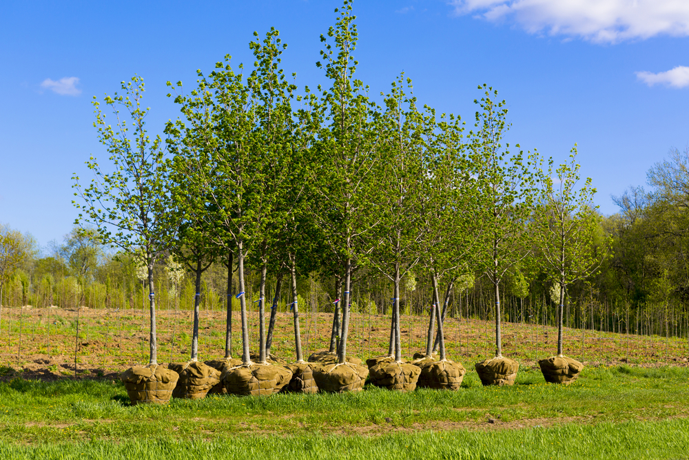 Изменение климата: посадка дополнительных деревьев увеличит количество осадков