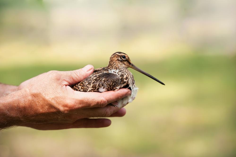 Африканская птица поставила рекорд высоты, поднявшись на 8,7 километров