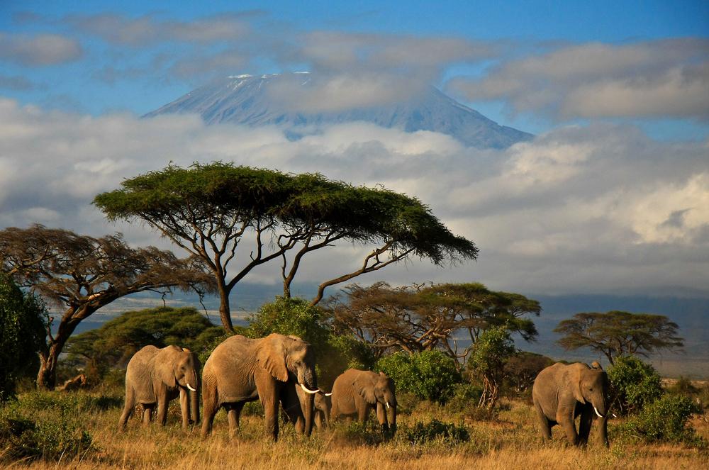 В Кении проведут первую перепись дикой природы