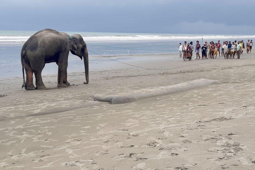 В Бангладеш слонов сперва напугали, а затем спасли.Вокруг Света. Украина
