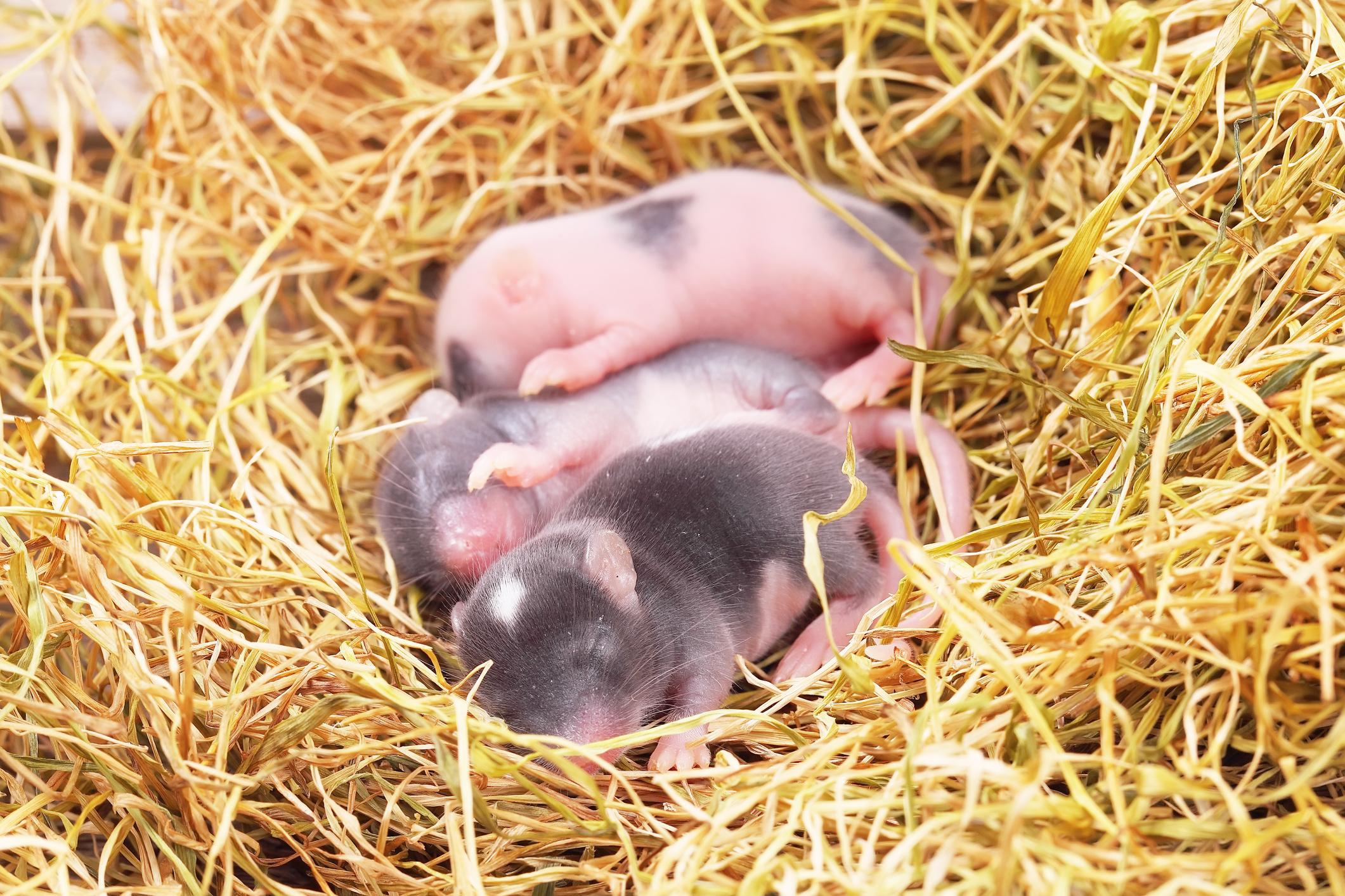 Млекопитающие могут видеть сны об окружающем мире еще до своего рождения