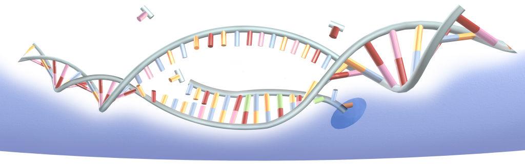Борги на Земле: загадочная ДНК, обнаруженная в пробах почвы, объединяет в себе гены разных организмов