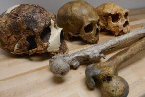 Размер тела древних людей зависел от изменений климата