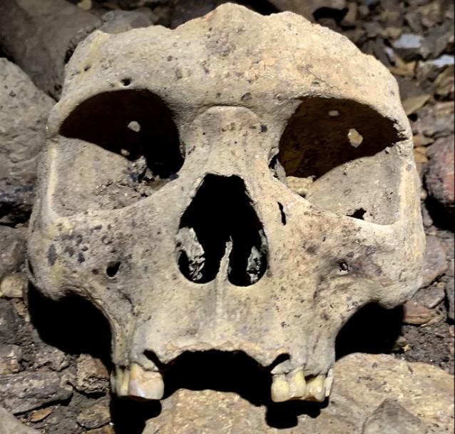 В Габоне нашли массовое захоронение людей с вырванными зубами.Вокруг Света. Украина