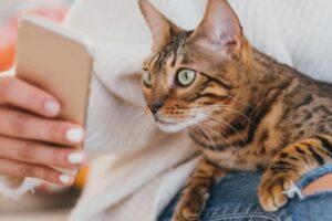 В Канаде придумали приложение для оценки настроения кота