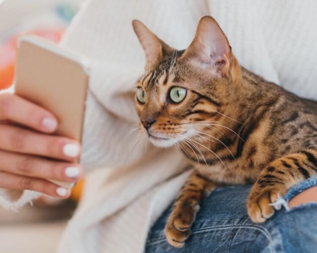 В Канаде придумали приложение для оценки настроения кота.Вокруг Света. Украина