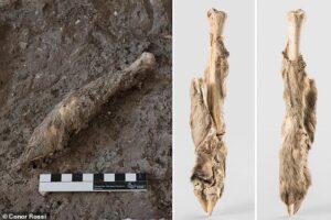 Биологи получили ДНК овцы возрастом 1600 лет благодаря находке в иранской соляной шахте