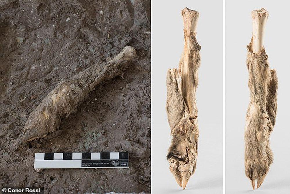 Биологи получили ДНК овцы возрастом 1600 лет благодаря находке в иранской соляной шахте.Вокруг Света. Украина