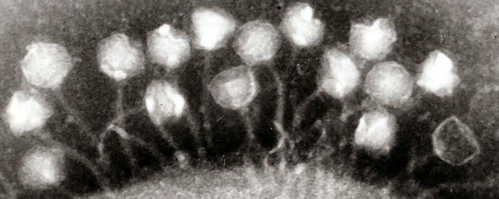В тающих тибетских ледниках обнаружены древние вирусы. Им 15 тысяч лет