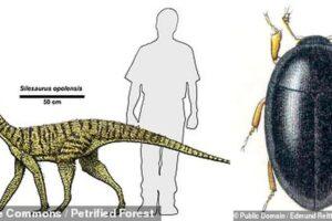 Самому древнему жуку 230 млн лет, и нашли его в экскрементах динозавра