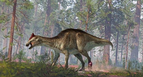 Ошибочный диагноз: перелом стопы гадрозавра оказался опухолью