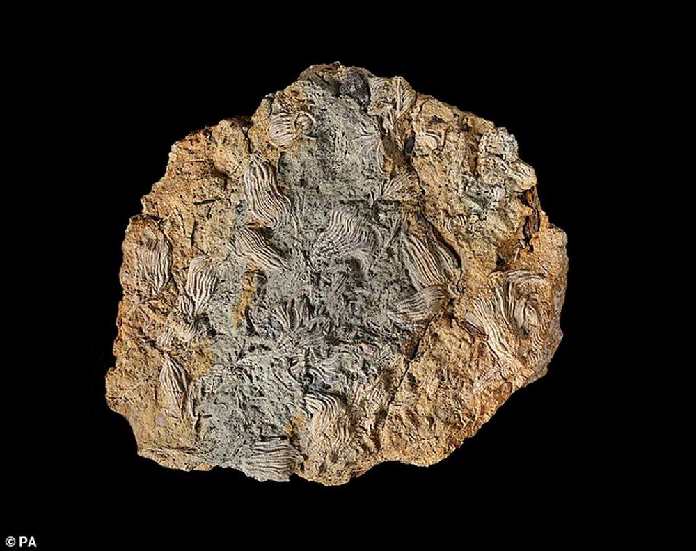 Палеонтологи-любители нашли крупнейшее в Великобритании месторождение морских окаменелостей.Вокруг Света. Украина