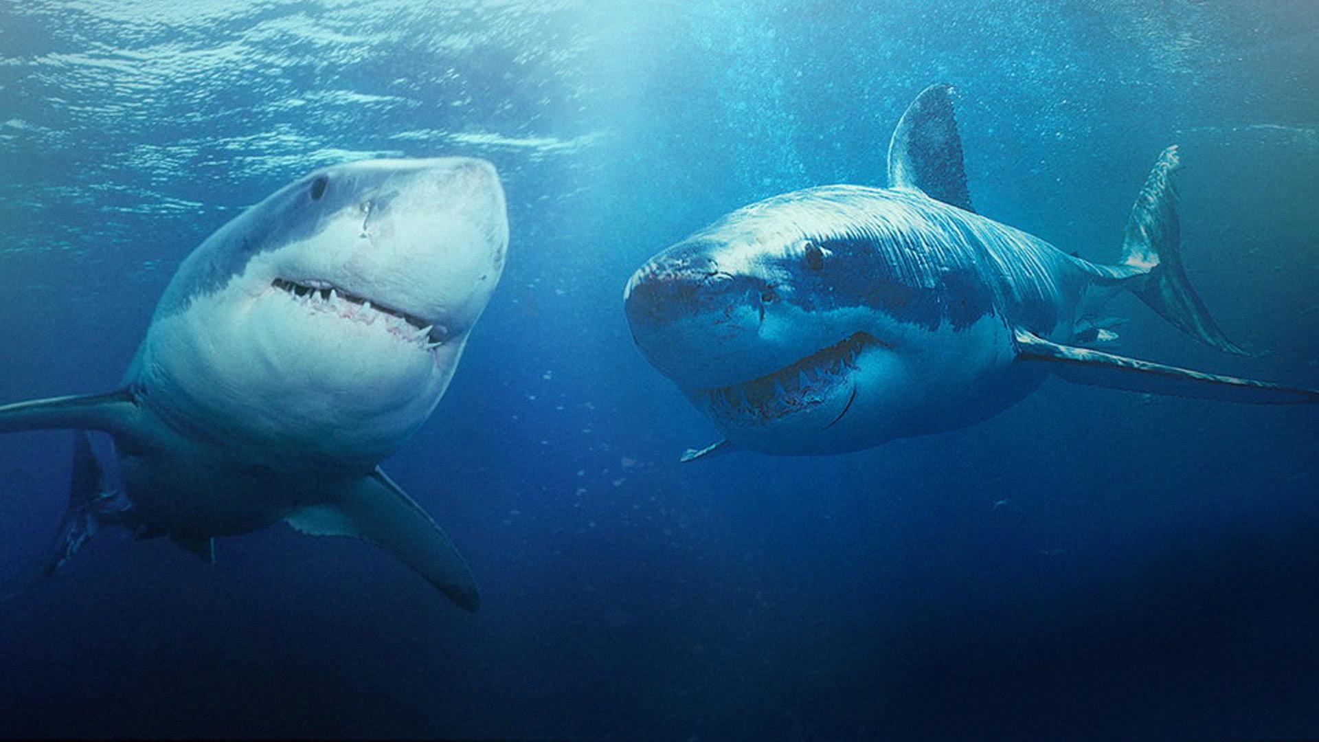 Какие акулы наиболее опасны и почему им тоже нужна защита?.Вокруг Света. Украина