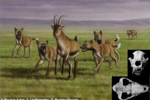 Первая охотничья собака в Европе жила 1,8 миллиона лет назад