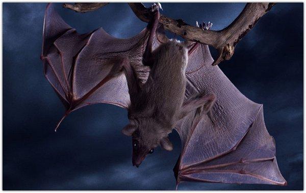 Летучие мыши: где обитают, что едят, чем полезны и опасны?.Вокруг Света. Украина