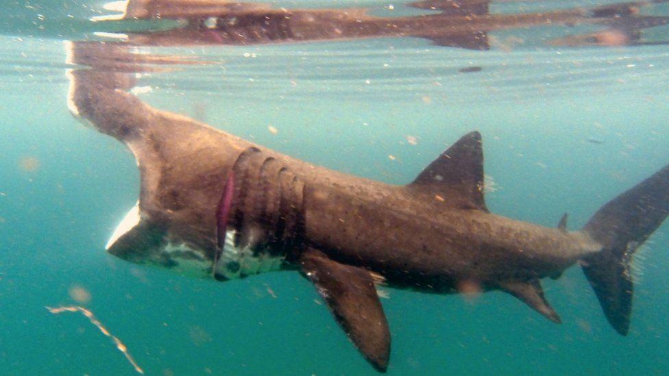Британский дайвер запечатлел редкую акулу с метрового расстояния: видео.Вокруг Света. Украина
