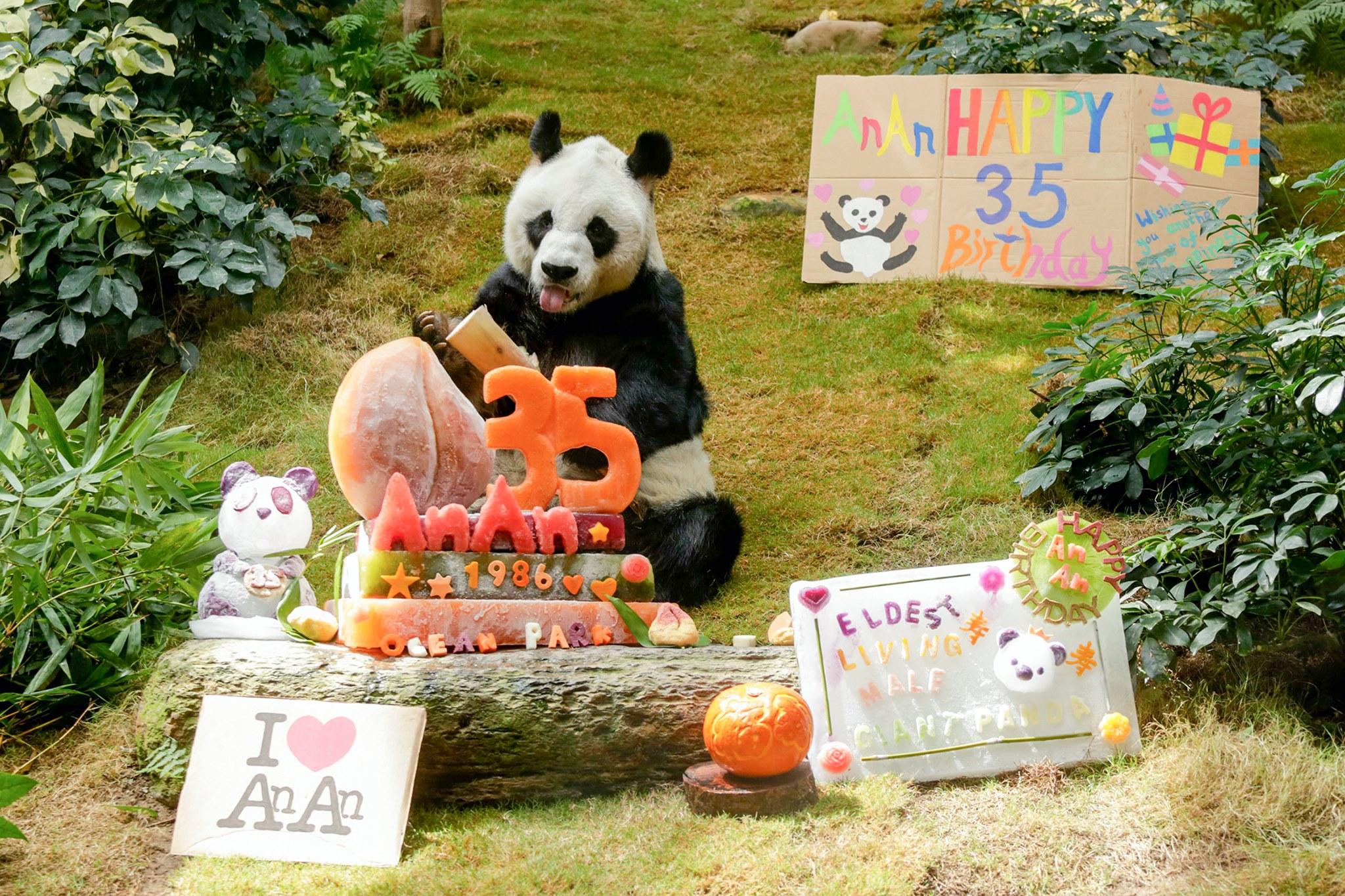 Старейший самец панды, обитающий в неволе, отметил 35 лет