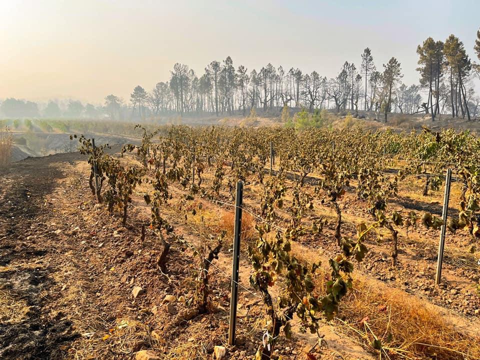 Во Франции в результате пожаров подорожает вино .Вокруг Света. Украина