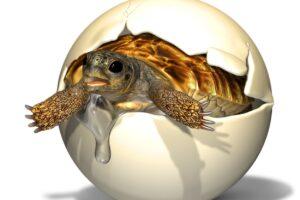 Палеонтологи нашли яйцо доисторической черепахи с эмбрионом