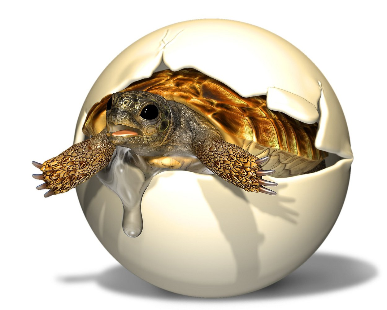 Палеонтологи нашли яйцо доисторической черепахи с эмбрионом.Вокруг Света. Украина