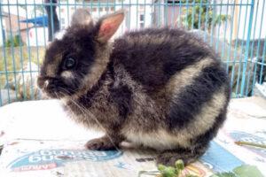 В Индонезии спасли редчайшего зайца благодаря посту в Facebook