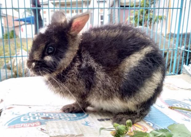 В Индонезии спасли редчайшего зайца благодаря посту в Facebook.Вокруг Света. Украина