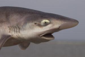 В итальянском океанариуме акула родила без самца