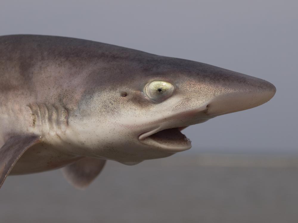 В итальянском океанариуме акула родила без самца.Вокруг Света. Украина