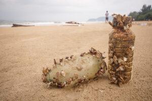 Морские обитатели массово колонизируют пластик