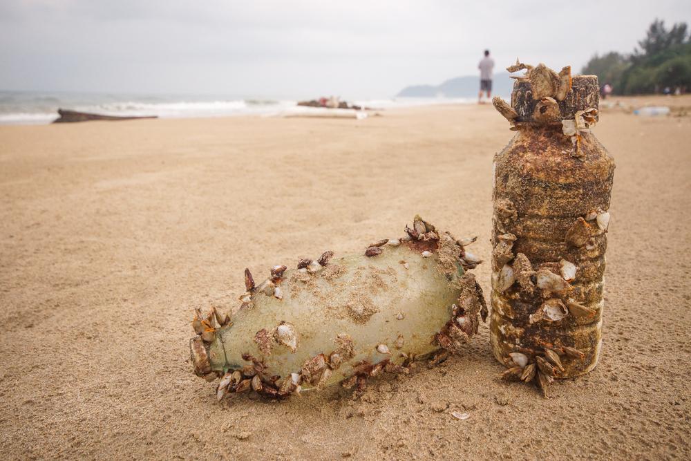Морские обитатели массово колонизируют пластик.Вокруг Света. Украина