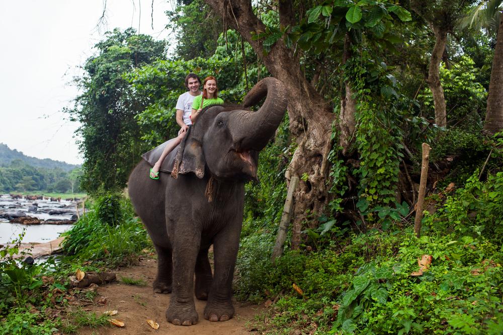 На Шри-Ланке запретили в нетрезвом виде управлять слонами.Вокруг Света. Украина