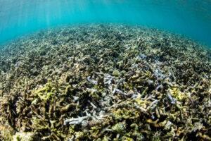 В Таиланде запретили солнцезащитные кремы, разрушающие кораллы