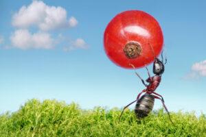 В Дубае открыли ресторан для муравьев