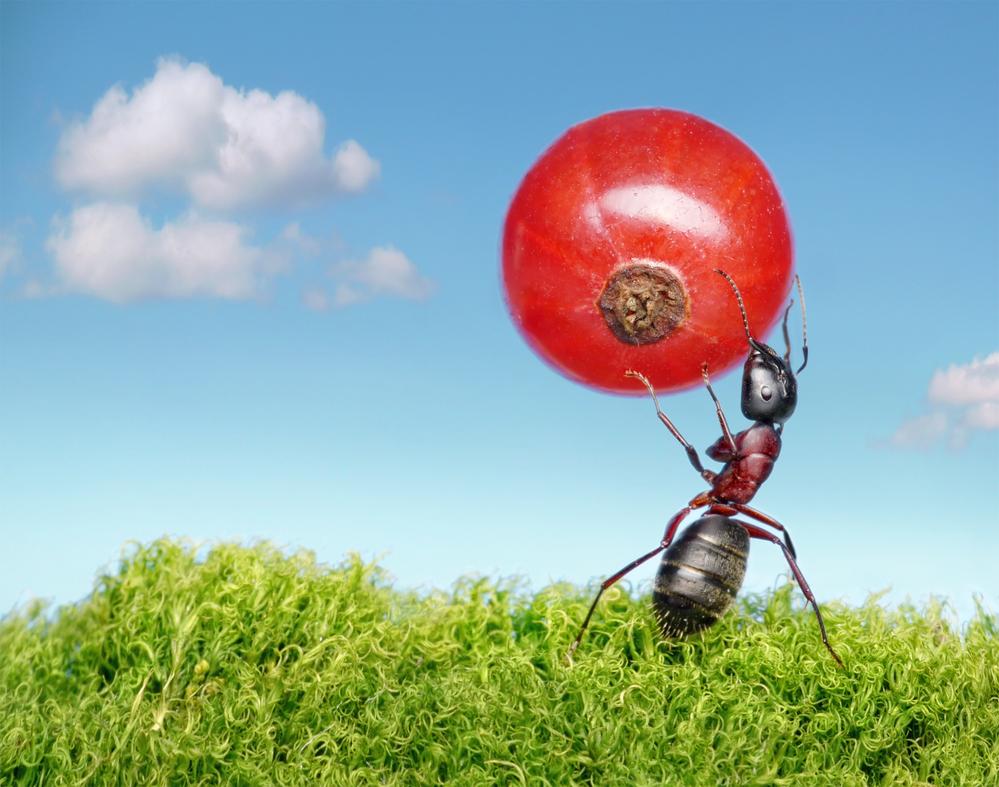 В Дубае открыли ресторан для муравьев.Вокруг Света. Украина
