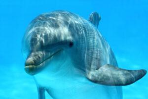Дельфины, как и люди, набирают вес с возрастом