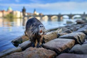 Животные в городах крупнее своих диких сородичей