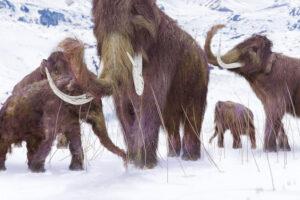 Палеонтологи выяснили, как жил и как умер мамонт с Аляски