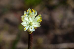 Избирательный хищник: в Канаде открыли новый плотоядный цветок