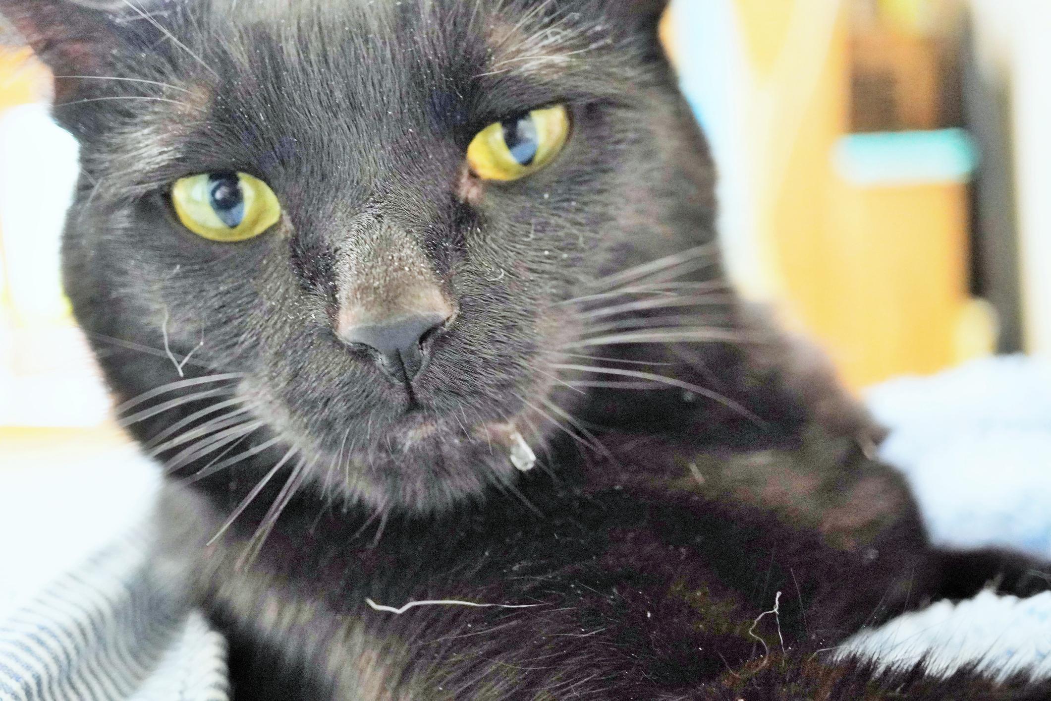 От счастья или от боли: почему у кошки текут слюнки?.Вокруг Света. Украина