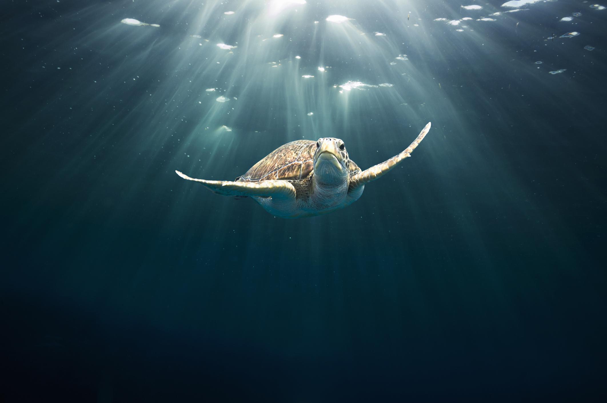 Почему черепахи живут так долго?.Вокруг Света. Украина