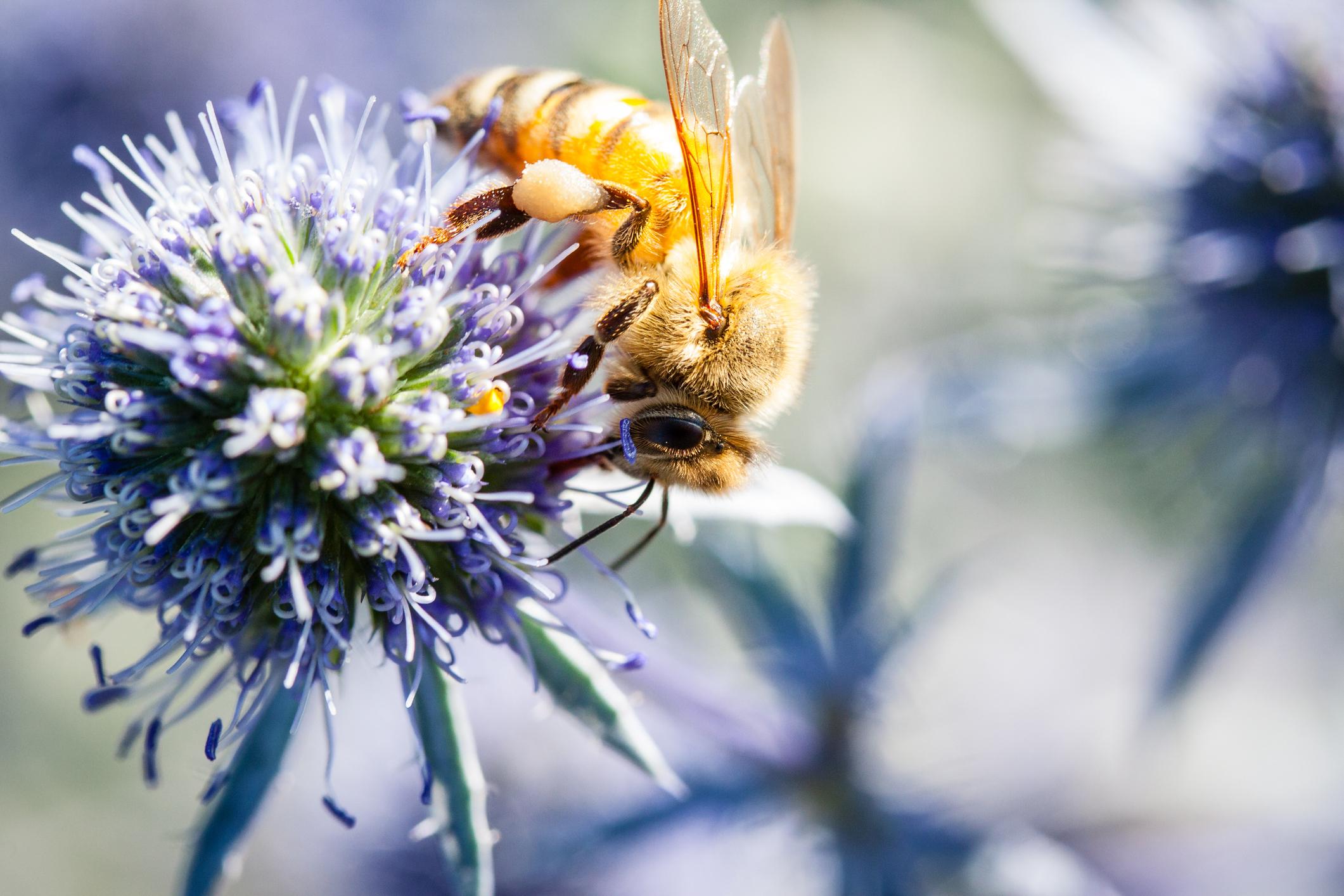 Сельское хозяйство убивает больше пчел, чем предполагалось - исследование.Вокруг Света. Украина