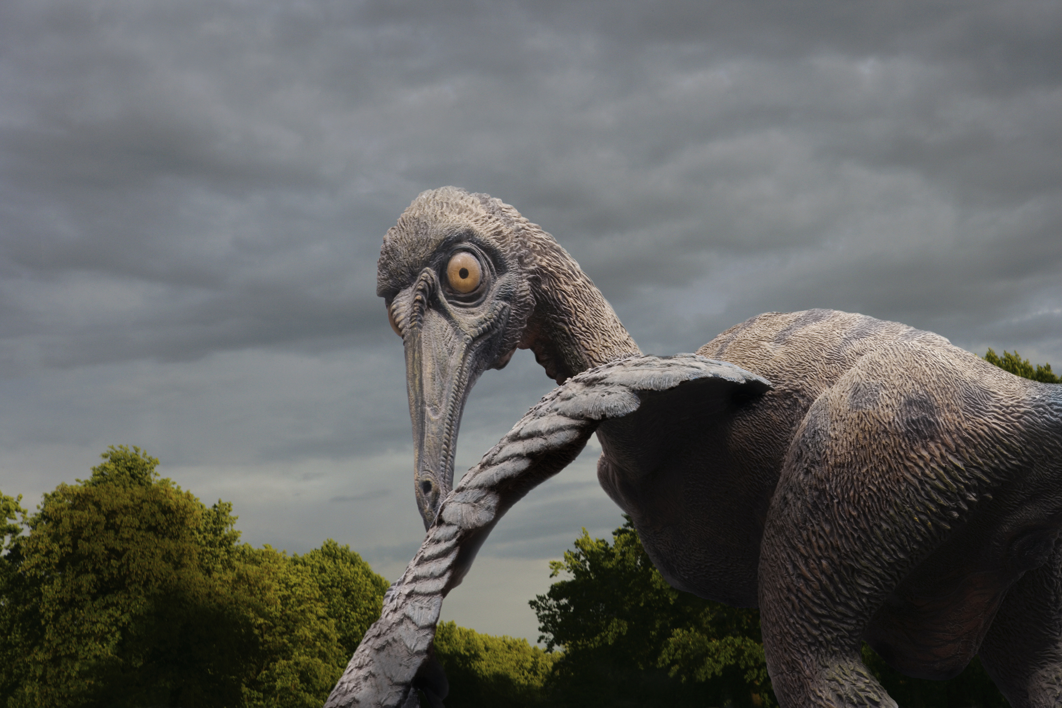 Почти 500 видов птиц вымерли из-за деятельности человека за последние 50 тыс лет - новое исследование.Вокруг Света. Украина