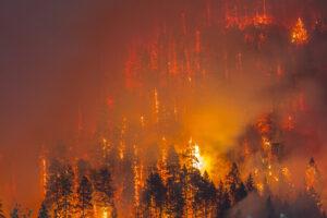 Почему лесные пожары усиливаются?