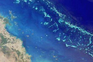 В Австралии нашли самый большой коралл Большого Барьерного рифа