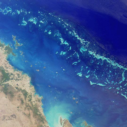 В Австралии нашли самый большой коралл Большого Барьерного рифа.Вокруг Света. Украина