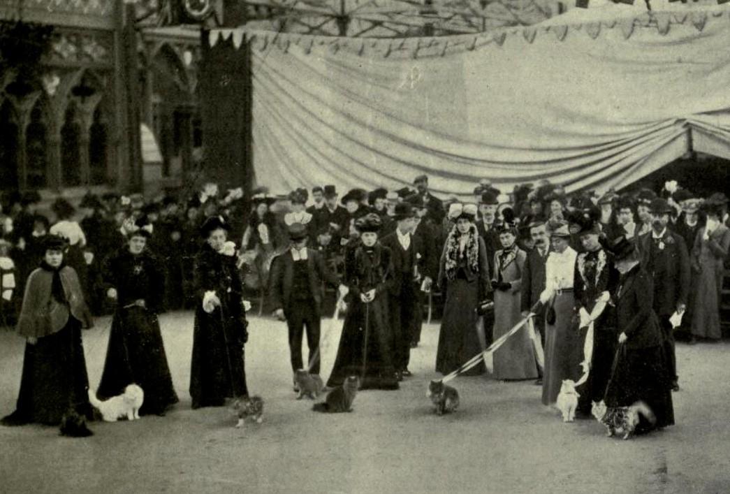 150 лет назад в Британии прошла первая в мире выставка кошек.Вокруг Света. Украина