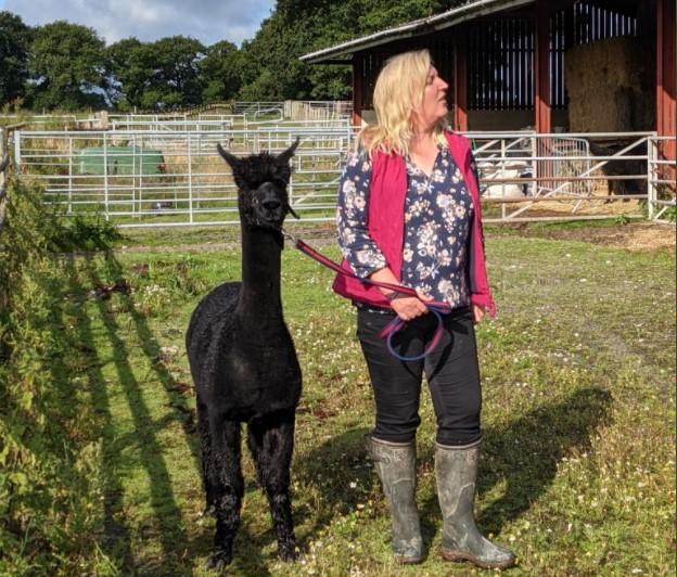 В Британии казнят альпака, за которого заступилась вся страна