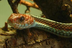 Аэропорт Сан-Франциско спас колонию редких змей