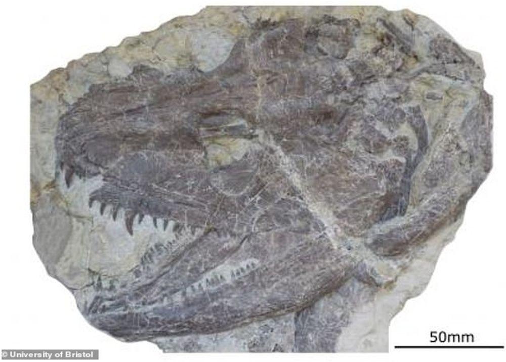 Археологи реконструировали амфибию возрастом 340 миллионов лет и нашли большое сходство с крокодилами