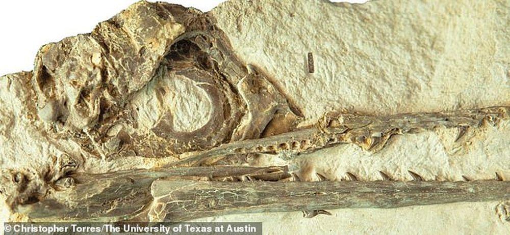 Первые птицы пережили удар астероида, убившего динозавров, благодаря большому мозгу